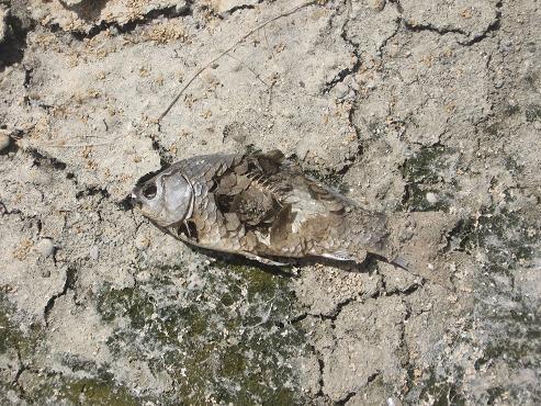 تصاویر جنایت زیستمحیطی در زاینده رود اصفهان