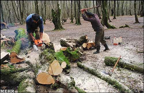 فرسایش خاک قطع درختان