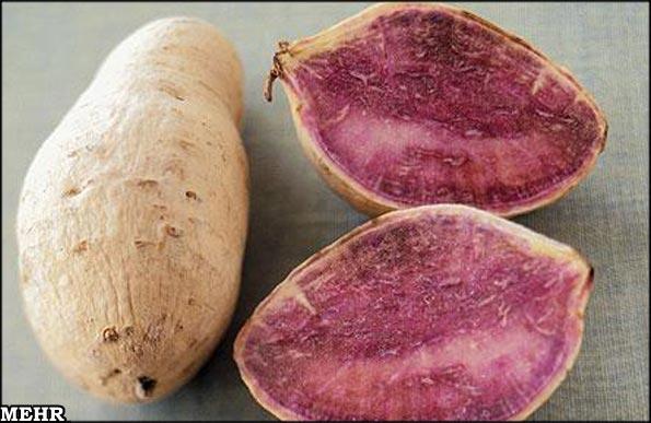تولید سیب زمینی جدید برای مبارزه با سرطان + عکس - http://www.funpatogh.com