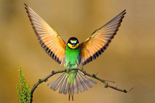 رنگآمیزی شگفتانگیز پرندگانhttp://www.emrozshop.ir/