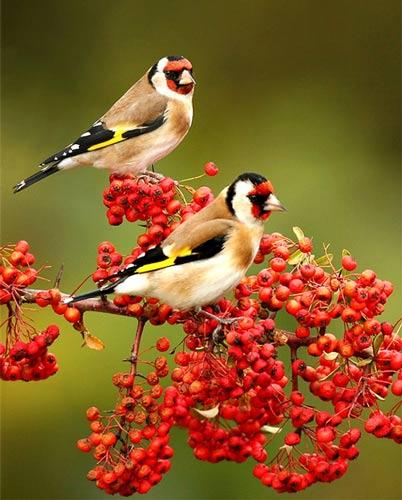 رنگآميزي شگفتانگيز پرندگان