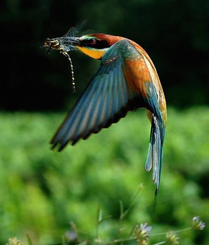 رنگآمیزی شگفتانگیز پرندگان (تصویری)