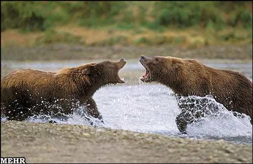 تصاویر: قویترین جانداران زمین www.TAFRIHI.com