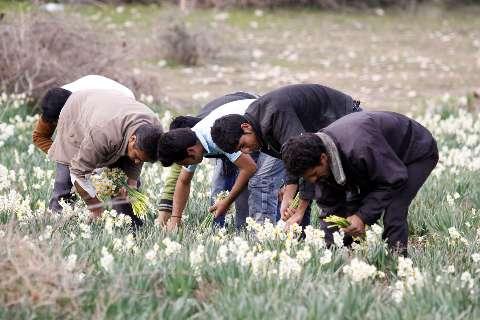 جاهای دیدنی ایران - شیراز