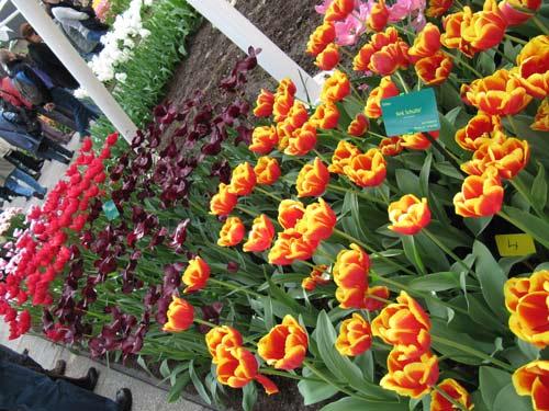 تصاویر زیبا از یک باغ گل در هلند