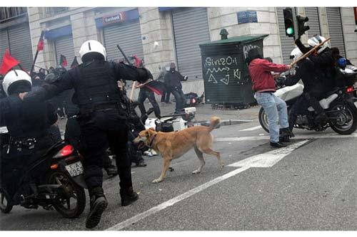 سگ عشق تظاهرات!