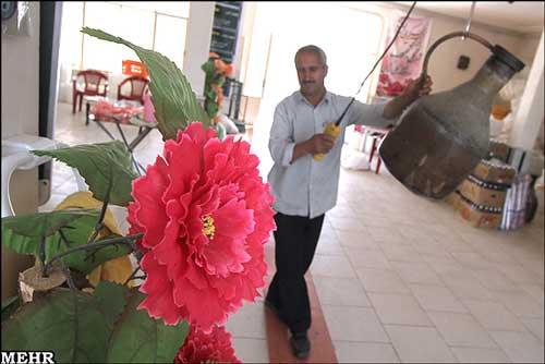 تصاویر: گل چینی و گلابگیری در کاشان