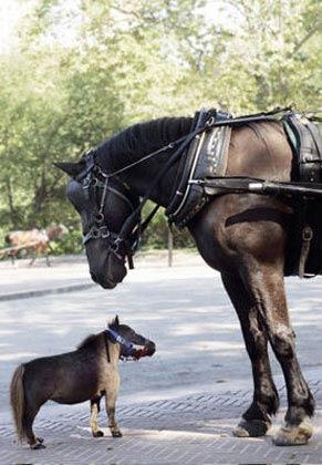 تصاویر جالب: کوتولهترین حیوانات جهان www.TAFRIHI.com