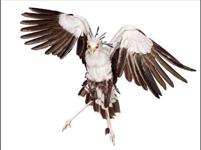 تصاویر جالب از نادرترین پرندگان جهان
