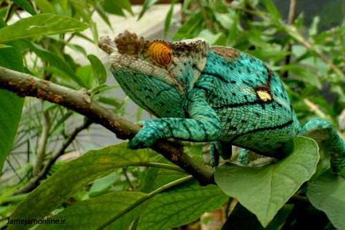 تصاویر: جزیره ماداگاسکار، سرزمین منحصر بفرد www.TAFRIHI.com