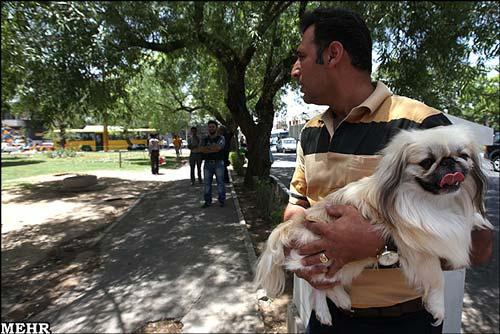 تصاویر و عکسهایی از خرید و فروش حیوانات خانگی در ایران
