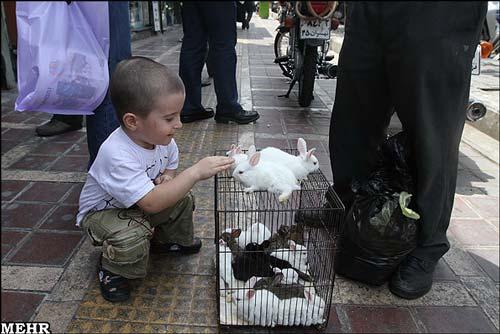 قیمت فروش حیوانات خانگی
