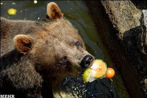 شیوه جالب مبارزه باگرمازدگی حیوانات! +عکس