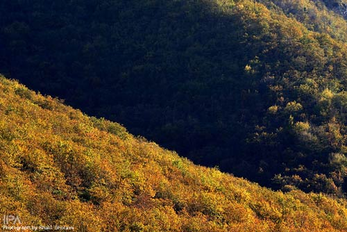 ارسباران, جنگل هاي ارسباران