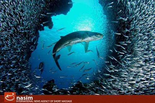تصاویر دیدنی از زیباییهای جهان زیر آب www.TAFRIHI.com
