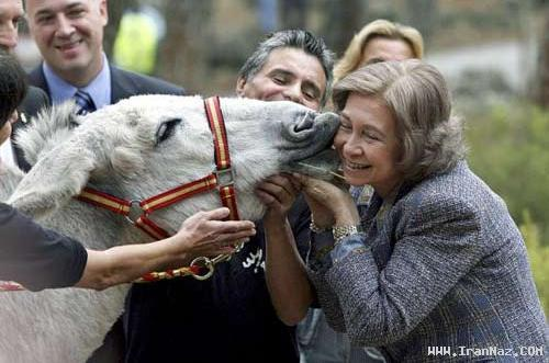خری که بر گونه ملکه اسپانیا بوسه زد