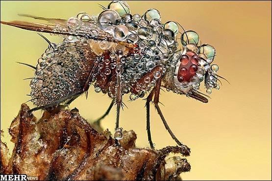 141940 574 آنچه باران بر سر حشرات می آورد + تصاویر