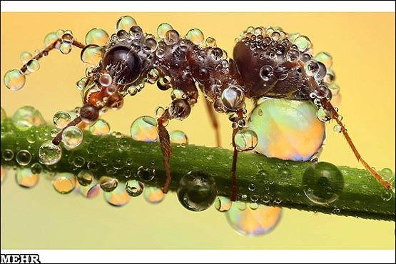141941 982 آنچه باران بر سر حشرات می آورد + تصاویر