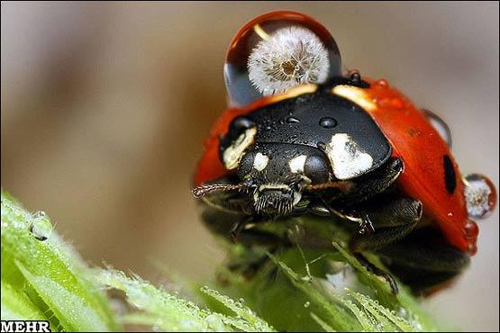 141942 583 آنچه باران بر سر حشرات می آورد + تصاویر