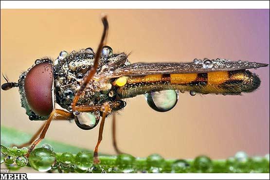141943 109 آنچه باران بر سر حشرات می آورد + تصاویر