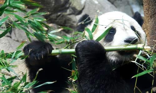 زیباترین حیوانات وحشی در حال انقراض +تصاویر 1
