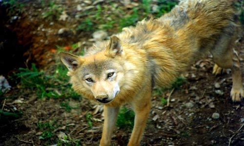 کانال تلگرام عکس حیوانات وحشی