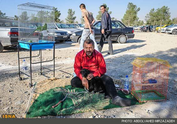 تصاویر: بورس پرنده فروشی در تهران