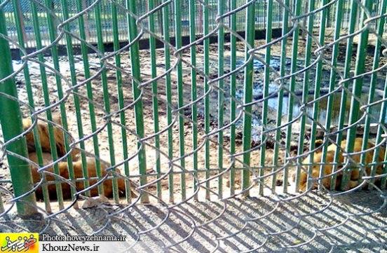 تصاویری تاسف بار از باغ وحشی که شایسته تعطیلی است!