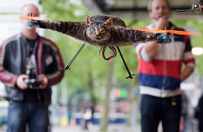 تصاویر عجیب گربه ی مرده ی پرنده!!