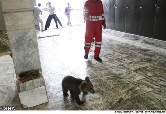 پیدا کردن 4توله شیر و 2قلاده توله خرس در مشهد +تصاویر