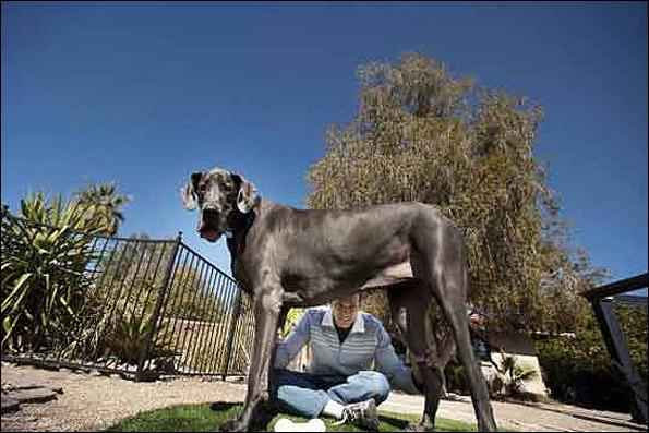 بلندترین سگ زنده دنیا