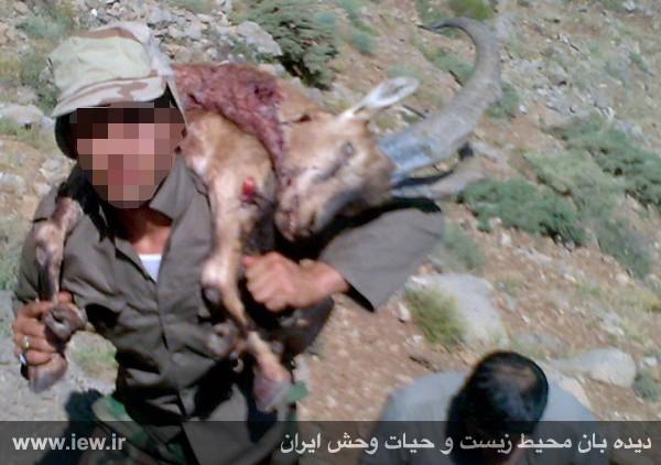 عاملان قتلعام حیات وحش لرستان زندانی شدند