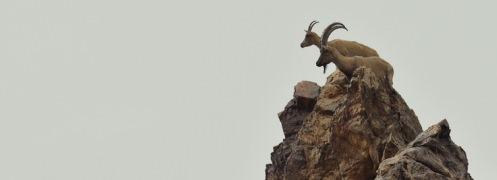 وقتی محافظان محیط زیست، مدافع «شکار» از نوع «تروفه» میشوند!