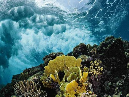 تصاویری از مرجانهای دریای سرخ Thomas P. Peschak