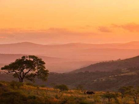 بچه کرگدن و مادرش، آفریقای جنوبی Brent Stirton