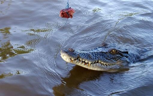 پارک تمساح ها، استرالیا<br /><br /> یکی از تفریحات بازدیدکنندگان این پارک در استرالیا غذا دادن به تمساح هاست.