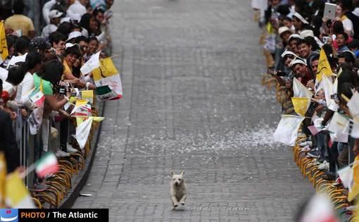 در حاشیه سفر پاپ به مکزیک، تصویر این سگ که لحظاتی پیش از ورود پاپ به شهر گوانجیتو در مسیر حرکت پاپ می دود به یکی از جذاب ترین تصاویر سفر پاپ به آمریکای جنوبی بدل شد.