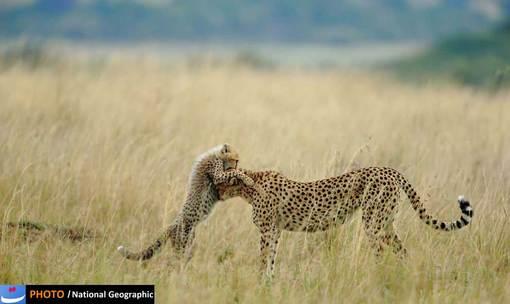 عکس:Sanjeev Bhor/پذیرفته شده در بخش طبیعت