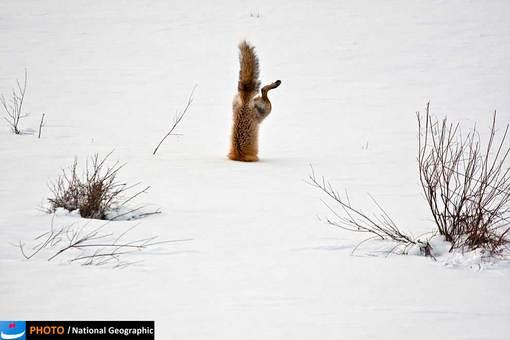 عکس:  Micheal Eastman/ پذیرفته شده در بخش طبیعت