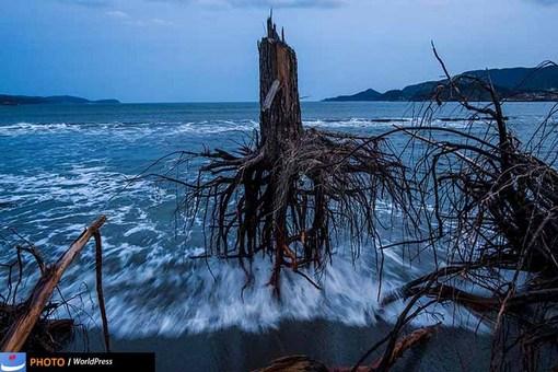 دانیل برهولک با تصویری از ریشه های کاج رها در ساحلی در ژاپن که دو سال پس از سونامی همچنان در در ساحل رها شده است هم در میان برگزیدگان ورد پرس قرار دارد.