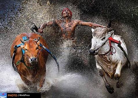 «وی سنگ چن» هم با تصویری از مسابقات محلی در سوماترا در میان برگزیدگان امسال قرار دارد.